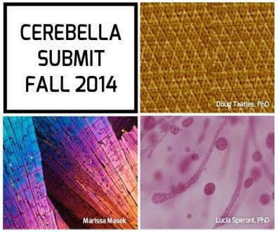 "© Cerebella Design ""Cerebella Submit""."